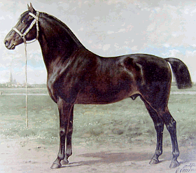 Oost-Fries_Paard_Lithografie_1898